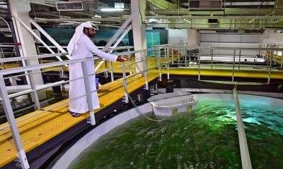 Fish Farm salmones en Dubai
